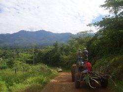 IJFD Costa Rica